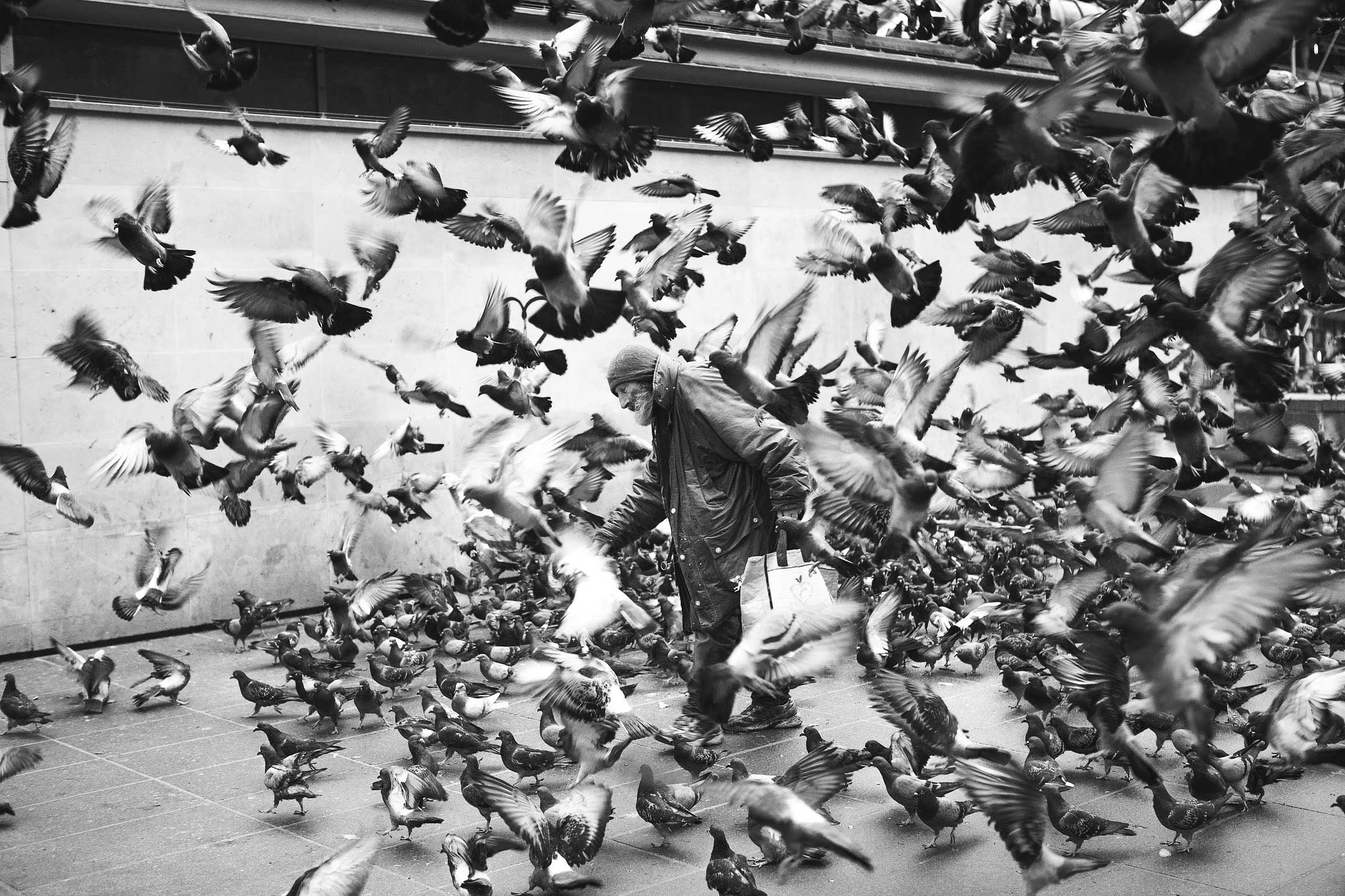 pigeons man street paris france cican